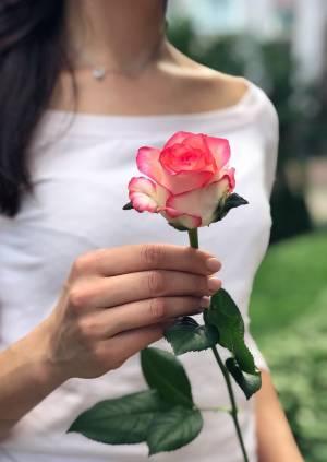 Роза Джумилия, (50 - 60см) - заказ и доставка цветов Киев