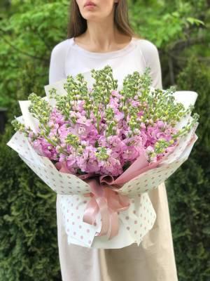 bouquet of 51 pink matthiola - заказ и доставка цветов Киев