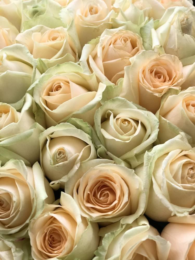 Букет 201 персиковая роза