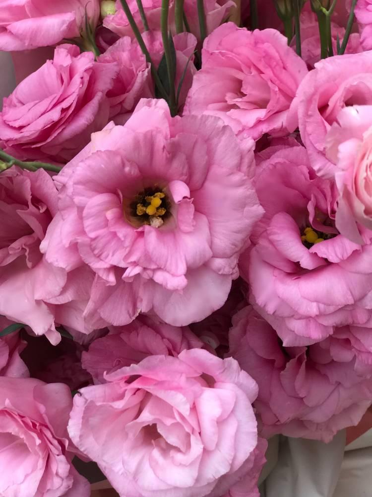 Букет 15 розовых эустом