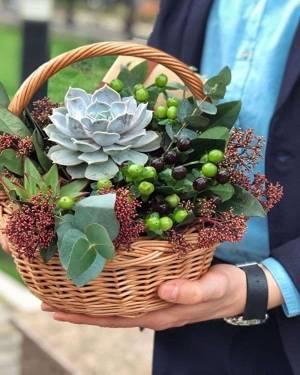 Суккуленты в корзине - заказ и доставка цветов Киев