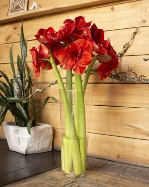 Ваза стеклянная коническая h40 d16,5 - заказ и доставка цветов Киев
