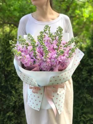 bouquet of 21 pink matthiola - заказ и доставка цветов Киев