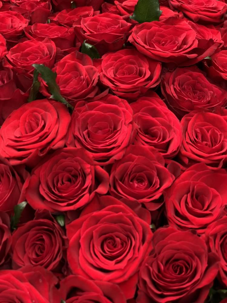 Букет 151 красная роза в упаковке
